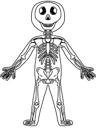 Kids Skeleton Human Body Clipart