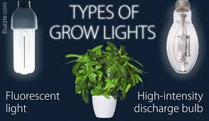cool a brief guide to choosing the best grow lights for indoor