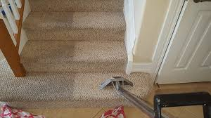 dolphin carpet cleaning restoration steam carpet cleaning