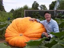 Dills Pumpkin Patch Columbus Ohio by 15 Best Giant Pumpkin Images On Pinterest Giant Pumpkin