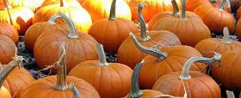 Ms Heathers Pumpkin Patch Louisiana by Pick A Pumpkin Family Fall Fun For 2017