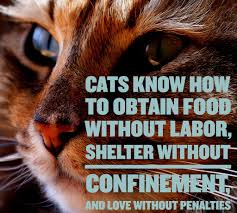 cat quotes cat quotes 25 sayings only cat will understand