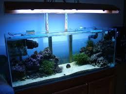 récifal recifal reef forum d eau de mer coraux poissons