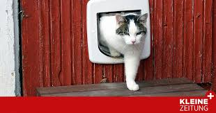 ihr gutes recht muss die katze des nachbarn im garten
