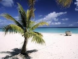 Tag Palm Trees Wallpapers Backgrounds PhotosImages And Pictures