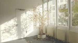 zimmerbaum diese 4 bäume eignen sich für die wohnung