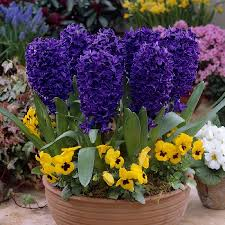 bulk flower bulbs cheap image collections flowers bouquet decoration