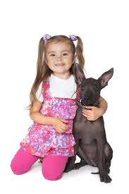 Non Shedding Dog Breeds Kid Friendly by 209 Best Hypoallergenic Dog Breeds Images On Pinterest Animals