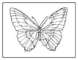 Butterfly To Color 4427