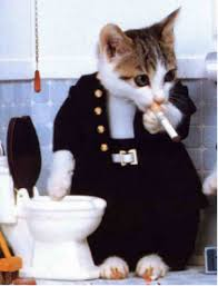 صور قطط مضحكة 2013 - اجمل و اروع صور مضحكة عن القطط 2013 images?q=tbn:ANd9GcSS33x6Lc8GcRSmpyvwr_l9SbPV5kYEAvHXNtfM6EGFKDP41cwY1w