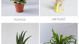 Best Plant For Bathroom by The Best Plants To Bring Life To Your Bathroom