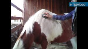 Horse Hair Shedding Tool by Shedding Your Horse Winter Coat Youtube