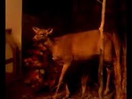 Cabela s trophy deer
