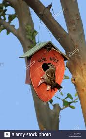 Nesting Sparrows Love Nest Love Romance Romantic Nature Backyard ... Backyard Birdhouse Youtube Free Images Insect Backyard Garden Inverbrate Woodland Amazoncom Boys Woodworking Bbw81 Cardinal Nest Box Bird House Decorative Little Wren Haing Yard Envy Table Lawn Home Green Lighting Wooden Modern Take On A Stuff We Love Pinterest Shop Glory 8125in W X 85in H 8in D White Discovery Channel Birdhouse Wooden Nesting Baby Birds In My Bird House How To Make Spring Diy Craft For Kids Couponscom