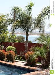 Palm Tree, Pool, Bay, Backyard Royalty Free Stock Image - Image ... Front Yard Landscaping With Palm Trees Faba Amys Office Photo Page Hgtv Design Ideas Backyard Designs Wood Above Concrete Wall And Outdoor Garden Exciting Tropical Pools Small Green Grasses Maintenance Backyards Cozy Plant Of The Week Florida Cstruction Landscape Palm Trees In Landscape Bing Images Horticulturejardinage Tree Types And Pictures From Of Houston Planting Sylvester Date Our Red Ostelinda Southern California History Species Guide Install