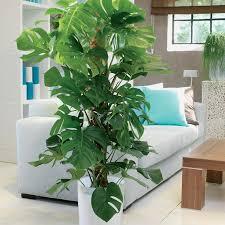 sind zimmerpflanzen gut für das raumklima mein schöner garten
