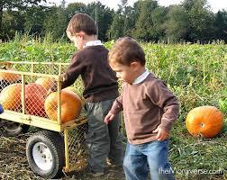 Local Pumpkin Farms In Nj by Best 25 Local Pumpkin Patch Ideas On Pinterest Pumpkin Field