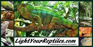 Basking Lamp For Chameleon by Arcadia Uv Lighting Reptile Light Fixtures Jungle Dawn Led
