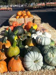Best Pumpkin Patch Livermore by Find Corm Mazes In Livermore California G U0026 M Farms In Livermore