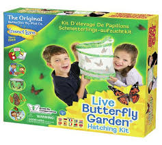 Buy Insect Lore Live Butterfly Garden at Argos Your line