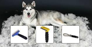 how to groom your husky snowdog guru