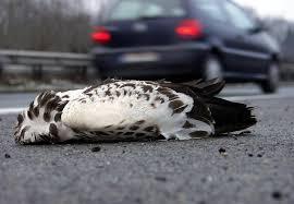 lebensgefährliches esszimmer greifvögel haben die autobahn