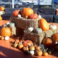 Pumpkin Patch Sacramento by Pick Of The Patch Pumpkins U0026 Abc Tree Farms Closed Pumpkin
