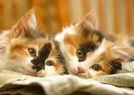 orange cat names least trendy cat names of 2014