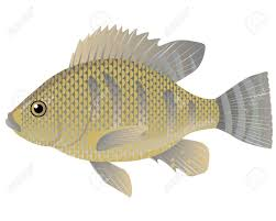 Tilapia Fish Cartoon Vector Illustration Stock