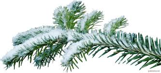 Christmas Tree Species Usa by Christmas Tree Branch Png Kanyagiftcenter Com Camo Pinterest