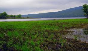 Laurel Bed Lake by Virginia Fly Fishing Fishing Report Clinch River And Big