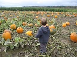 Snohomish County Pumpkin Patches by Best 25 Pumpkin Patch Seattle Ideas On Pinterest Pumpkin