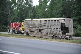 100 Cow Truck Overturned Cow Trailer Multiple Car Accidents Bring Birminghams