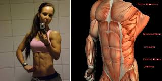 Captains Chair Abs Bodybuilding by The 5 Best Ab Exercises Steroids For Sale
