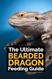 Bearded Dragon Heat Lamp Broke by Ultimate Bearded Dragon Diet Guide What Do Bearded Dragons Eat