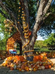 Real Pumpkin Patch Dfw by A Fall Must See Chihuly Glass And Pumpkin Patch At The Dallas