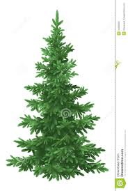 Christmas Tree 7ft Black by Christmas Fir Tree Isolated Stock Photo Image 34383920