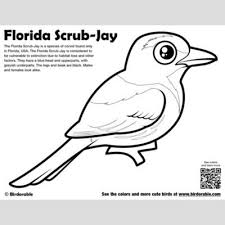 Florida Flag Coloring Page Us State Flash Cards