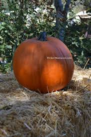 Libbys Pumpkin Nutrition Facts by Pumpkin Facts To Know Writer Mariecor
