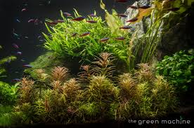Huge Aquascape Tutorial Step By Step- Spontaneity By James Findley ... Hamsa Wabikusa Style Aquascaping World Forum Httpwww Nature Aquarium And Aquascaping Wiki 25l Nano Capa 2011 French Aquascapers Results My Scape Iaplc Rank 70 The Passing Of Legend Takashi Amano Magazine With Nicolas Guillermin Surreal Submarine Amuse Aquascape The Month August 2010 Beyond Riccardia Chamedryfolia Question This Is Ada 2009 Susanna Aquascape Garden Bonsai Plants