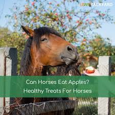 Can Horses Eat Apples? Healthy Treats For Horses (Dec, 2017) Tennessee Weather Sleipnir Morgan Horse Farm Blog Build Compost Pile And Spread Manure Little Backyard World In My Life Of Lisa Laporte Electric Tape Fence Home Gardens Geek Becca Gem Backyard Horse Jumping Youtube Free Images Fence Animal Wall Shed Paint What Exactly Is A Roan Expert Advice On Care Order Blind Lonely Getting Older California Finds New Friend Sculpture Patricia Borum Cqright Otographs The Assembled 14 Camp Expo Pics Catskill Arabian Horses Texas Ranch Sullivan