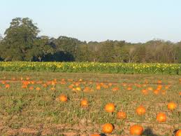 Griffin Farms Pumpkin Patch by 10 Best Pumpkin Patches In Alabama