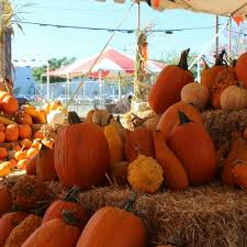 Pumpkin Patch Sacramento 2015 by 4 Acre Corn Maze Yelp