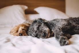 soll mein hund bei mir im bett schlafen