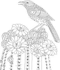 Birds Coloring Pages For Adults