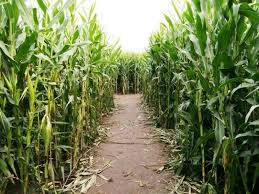Ms Heathers Pumpkin Patch Louisiana by Best Corn Mazes In The New Orleans Area Axs