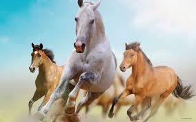 Exclusive Horse Wallpapers About Animal Pet And Wildlife Advices HD Images Colorful Photos Widescreen Original Pictures Are Available Hare For You