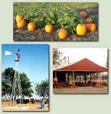 Celina Pumpkin Patch Directions by 137 Best Images About Griffin U0027s 1st Birthday On Pinterest Apple
