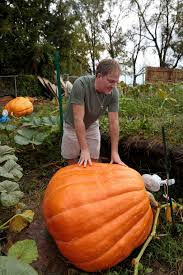 Atlantic Giant Pumpkin Growing Tips by Unable To Re Create 1 400 Pound Record Holder Pumpkin Grower