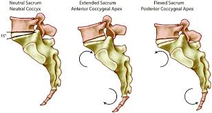 Pelvic Floor Tension Myalgia by Musculoskeletal Conditions Related To Pelvic Floor Muscle